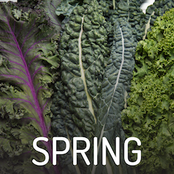 Spring Featured Foods Button