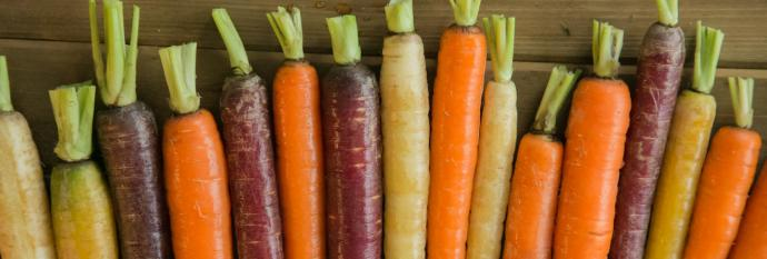 multicolored carrots in a row