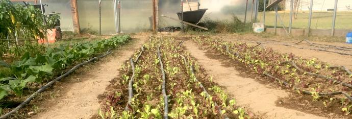 Salad greens are a key ingredient to a successful farm to school partnership!