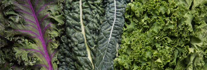 Kale can be found in a variety of textures and colors!